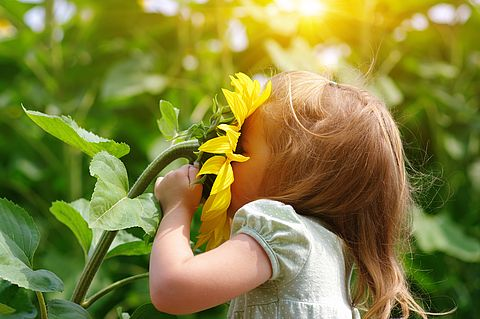 [Translate to Englisch:] Blondes Mädchen riecht an einer Sonnenblume