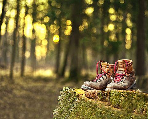 [Translate to Englisch:] Wanderschuhe auf einem Baumstumpf im Wald